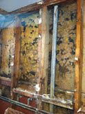 mold inspection Denver