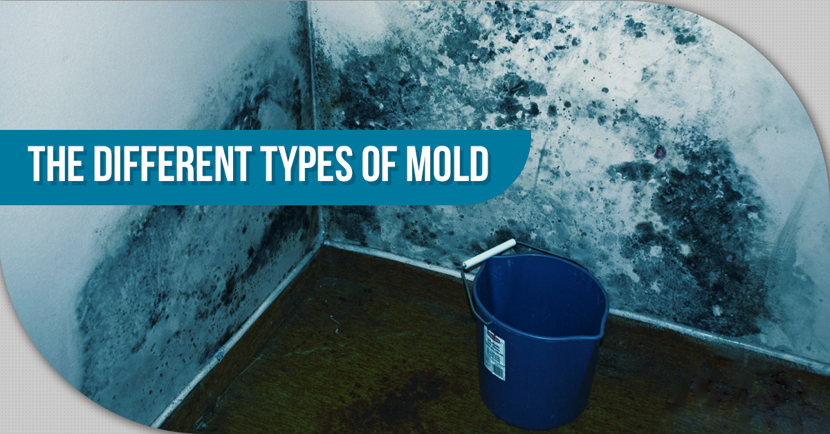The Different Types Of Mold
